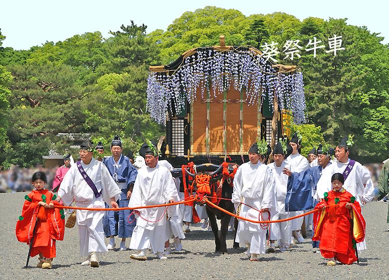 葵祭(牛車の写真)